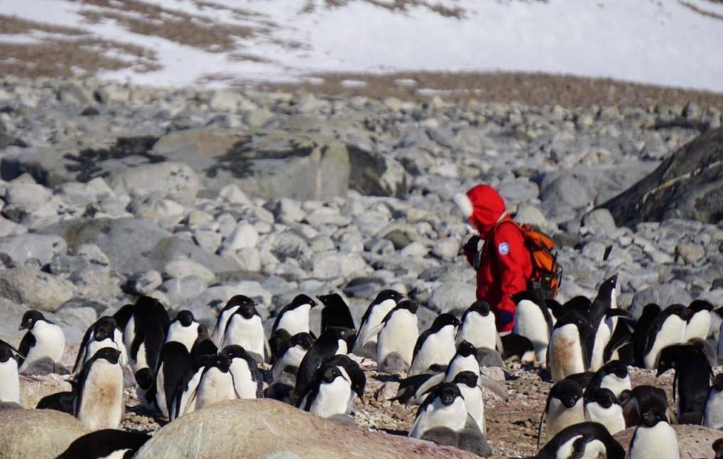 Escursionista con giacca, pinguini e rocce