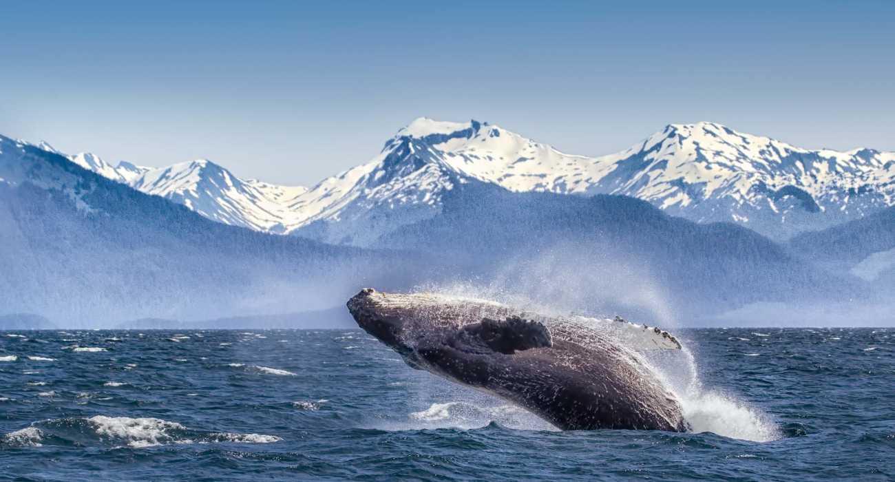 Senza turismo balene Alaska