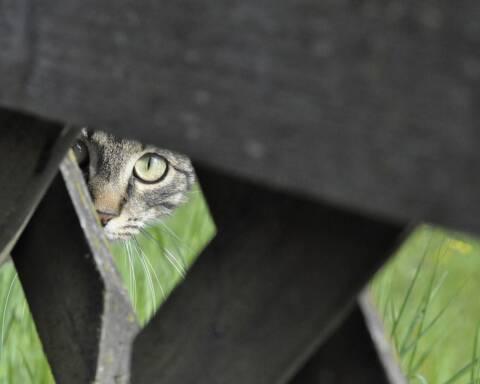 Stalking: il reato della porta accanto