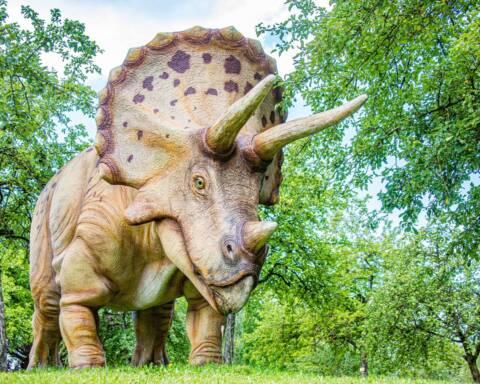 Triceratopo Foto di Hermann Kollinger da Pixabay